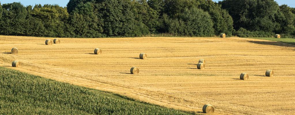 vente propriete agricole 63
