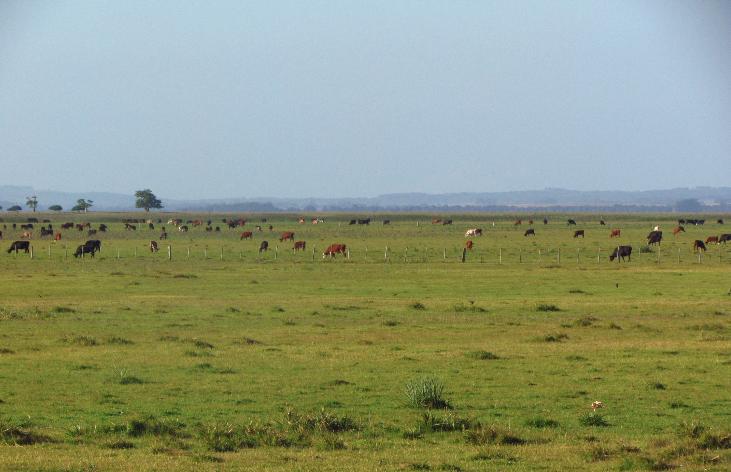 vente propriete agricole uruguay