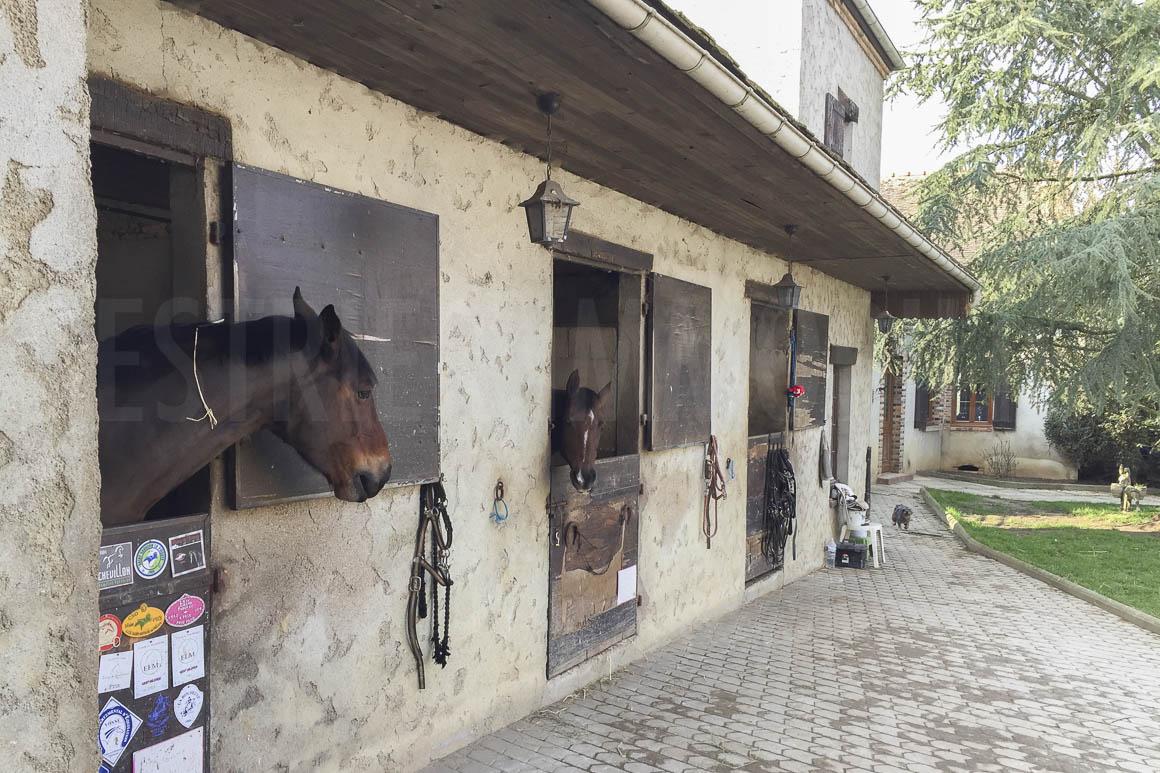 vente propriete equestre yonne